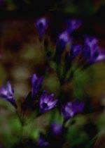 flowerbak